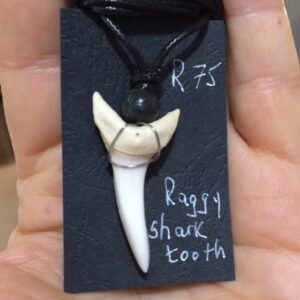Fresh shark teeth pendants