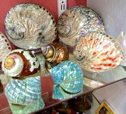 Various polished shells