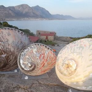 Perlemoen polished shells